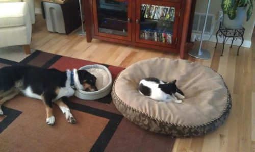 dogs and cats beds